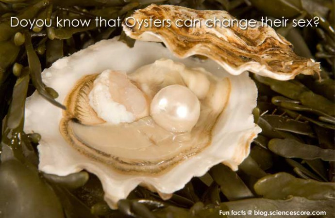 Did you know that oysters can change their sex?