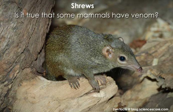 Is it true that some mammals have venom?