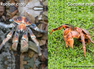 Which arthropod is the biggest?