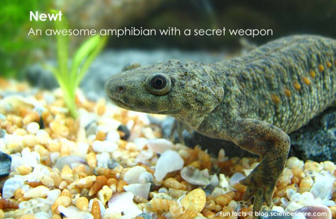 What animal carries a secret weapon?