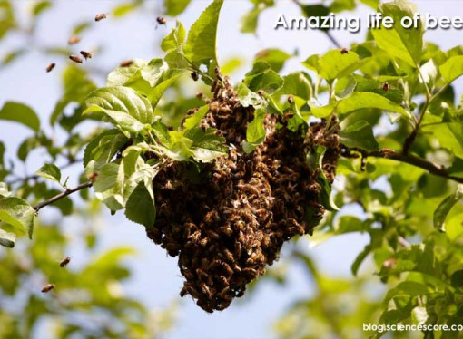 Amazing life of bees