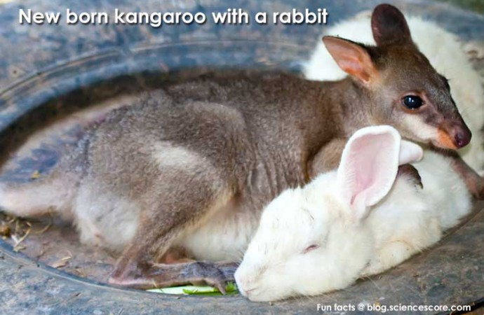 Did you know that newborn kangaroos don't have hind legs?