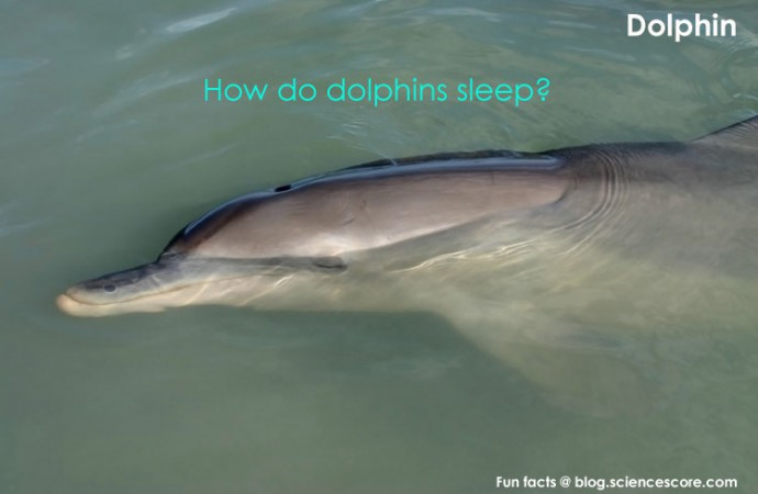 Dream of the Dolphin