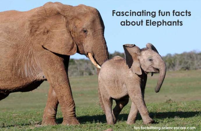 Facinating animal facts – Elephants