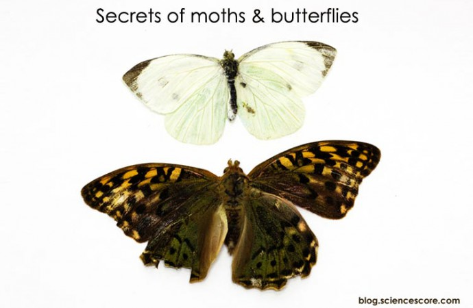 Two of a kind – secret of moth & butterfly