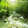 A Romp Through a Rainforest