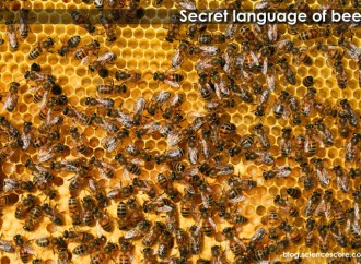 The Secret Language Of Bees