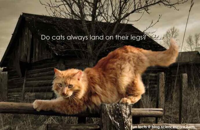 Why do cats land on their feet?