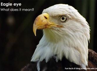 "What does ""eagle-eyed"" really mean?"