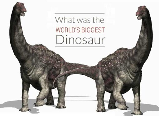 Biggest Dinosaur in the world discovered