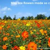 why are flowers so colorful?