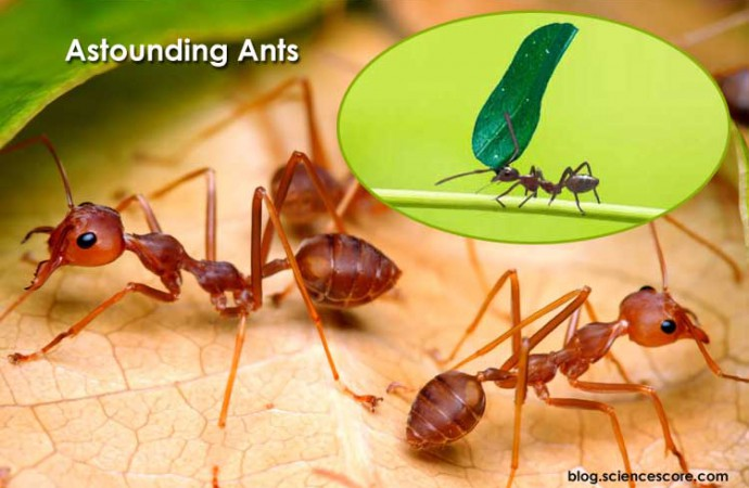 Astounding Ants