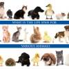Life-span-of-animals