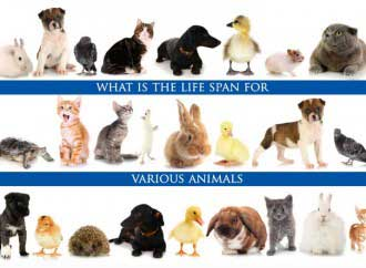 How long do cats,dogs, elphants and other animals live?