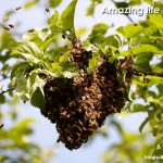 The Amazing Life Of Bees