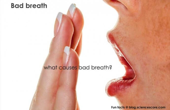 Why does our breath stink in the morning?