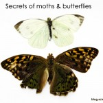 Two of a Kind: the secrets of moths and butterflies