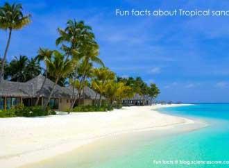 tropical-sand