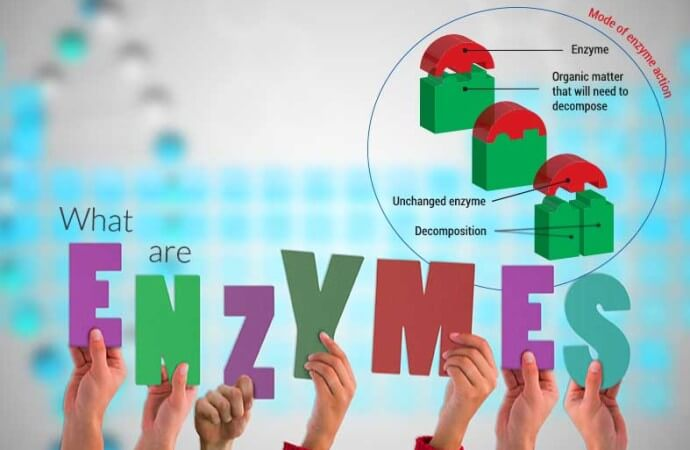 What are enzymes?