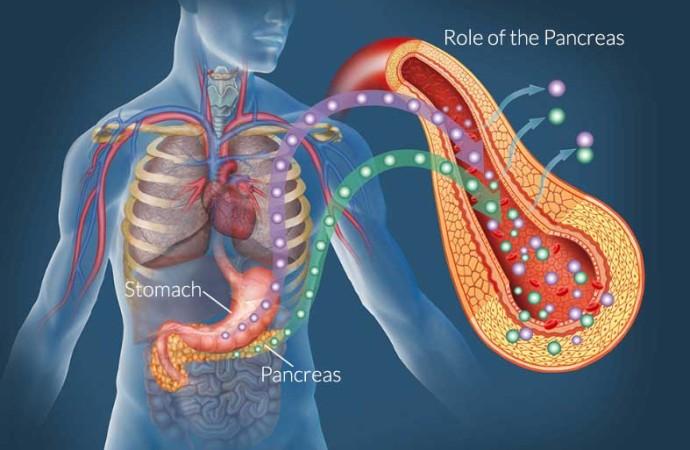 Pancreas: Pancreas What Does It Do