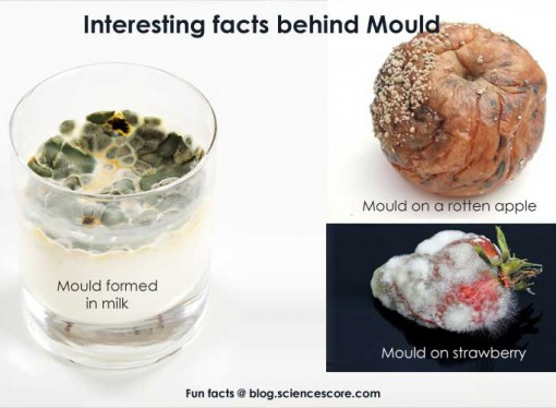 Did you know that medicine comes from mold?