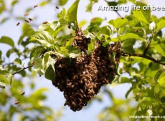 Amazing life of bees