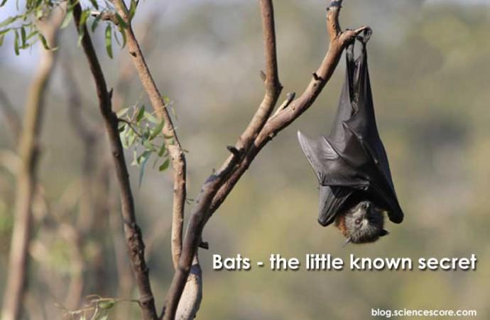 Bats – the little known secret