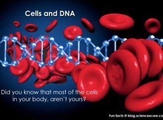 Did you know that most of the cells in your body aren't yours?