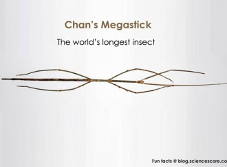The World's Longest Insect