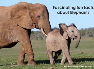 Facinating animal facts – Elephants