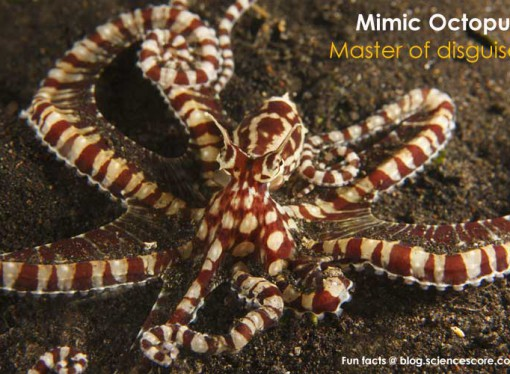 Which Sea Creature is a Master of Disguise?