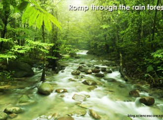 A Romp Through a Rainforest