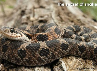 Scaly Surprises: The Secrets of Snakes