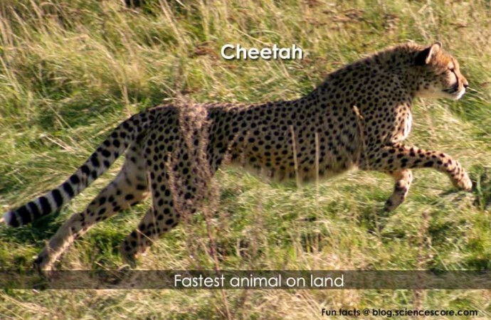 What is the fastest animal?