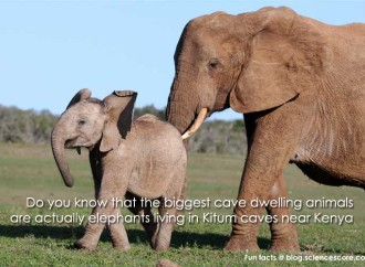 What are the biggest cave-dwelling animals?