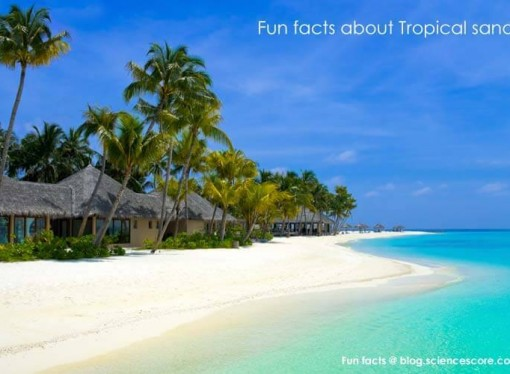 Did you know that tropical sand is made from fish poop?